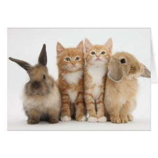 Two Kittens and Two Bunnies! Card