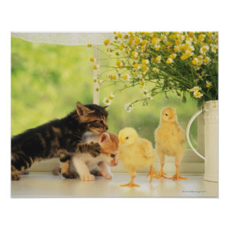 Two Kittens and Two Chicks Playing, Front View, Poster