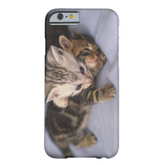 Two kittens barely there iPhone 6 case