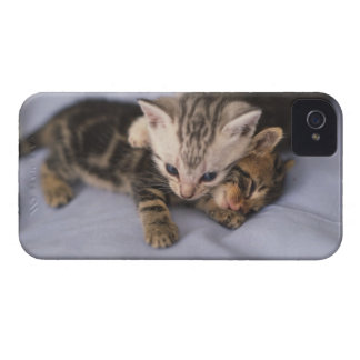 Two kittens Case-Mate iPhone 4 case