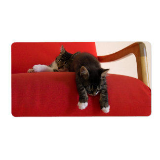 Two Kittens Hanging off a Red Chair Cushion Label
