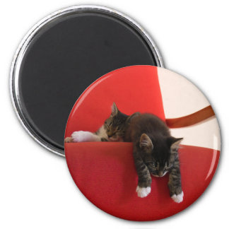Two Kittens Hanging off a Red Chair Cushion Magnets