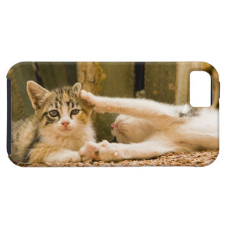 Two kittens, Morocco iPhone 5 Cases