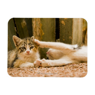 Two kittens, Morocco Magnet