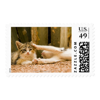 Two kittens, Morocco Postage Stamp