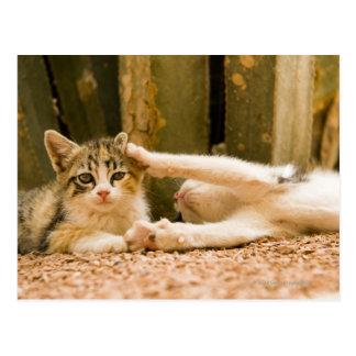Two kittens, Morocco Postcard