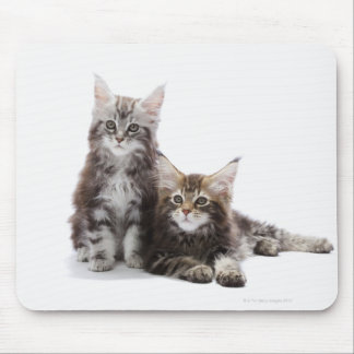 Two kittens of Maine coon cat Mouse Pad