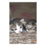 Two kittens on log customized stationery