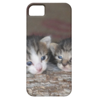 Two kittens on log iPhone SE/5/5s case