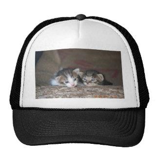 Two kittens on log trucker hat