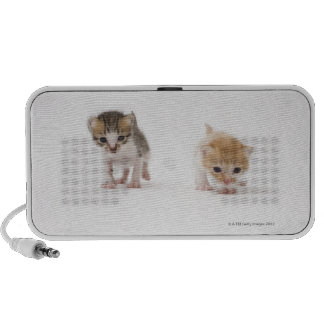 Two kittens on white background speaker