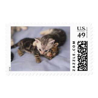Two kittens postage stamp