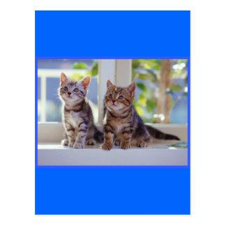 Two Kittens Postcard