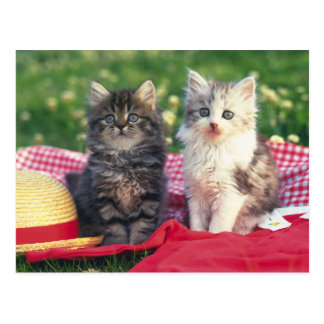 Two Kittens Sitting On A Red-Colored Blanket Postcard