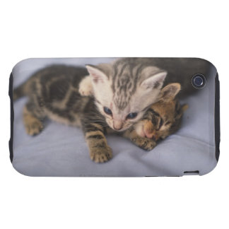 Two kittens tough iPhone 3 cover