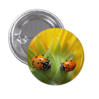 Two Lady Bugs on a Sunflower Button