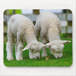 Two Lambs Grazing Mouse Pad