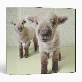 Two Lambs Indoors with Floral Wallpaper 3 Ring Binder