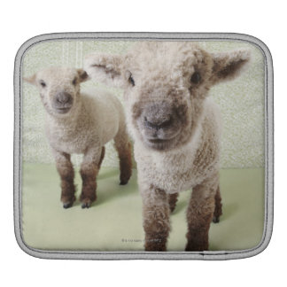 Two Lambs Indoors with Floral Wallpaper iPad Sleeve