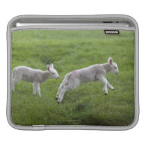 Two Lambs Sleeve For iPads