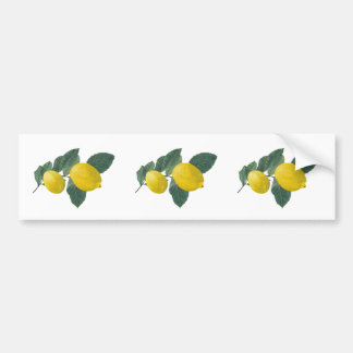 Two lemons on a branch. Oil painting. Bumper Sticker