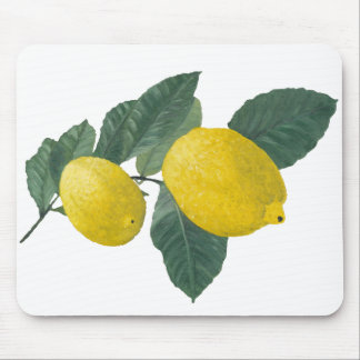 Two lemons on a branch. Oil painting. Mouse Pad