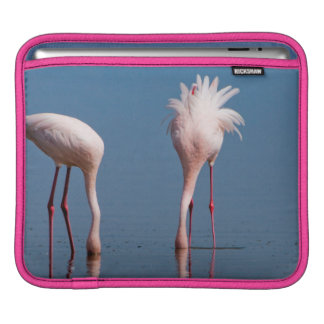 Two Lesser Flamingos (Phoenicopterus Minor) Feed Sleeve For iPads