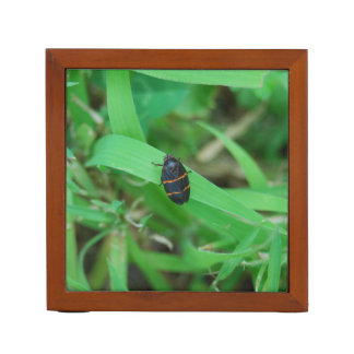 Two Lined Spittle Bug Desk Organizers