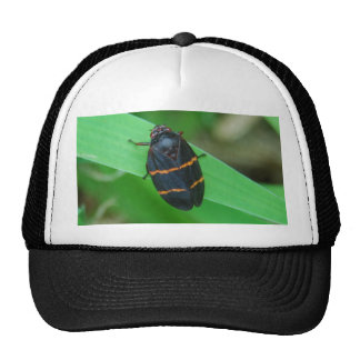 Two Lined Spittle Bug hat