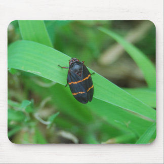 Two lined spittle bug mousepad