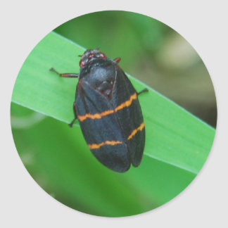 Two lined spittle bug sticker