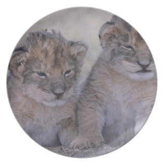 Two Lion Cubs Dinner Plate