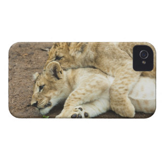 Two lions cubs playing. iPhone 4 case