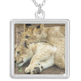 Two lions cubs playing. silver plated necklace