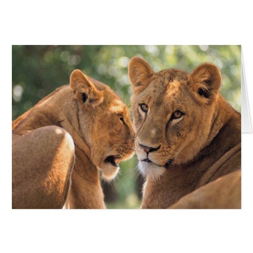 Two Lions Greeting Card
