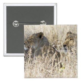 Two lions hidden in dry grass, Kruger National Button
