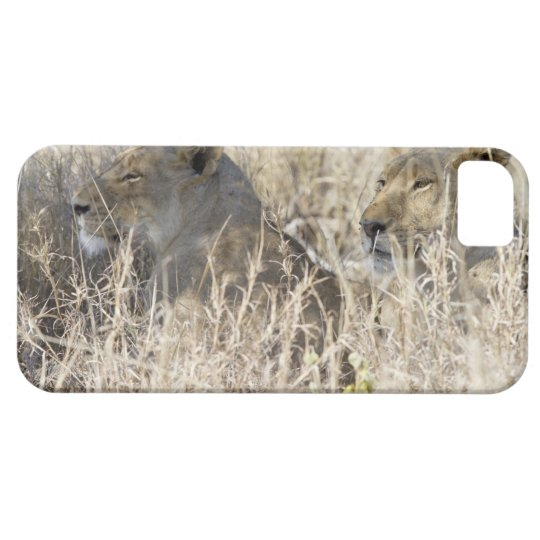 Two lions hidden in dry grass, Kruger National iPhone SE/5/5s Case