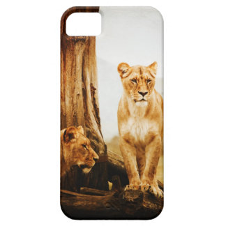 Two Lions Lioness iPhone 5 Case