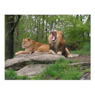 Two Lions Postcard