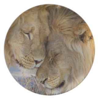 Two Lions rubbing each other Dinner Plates
