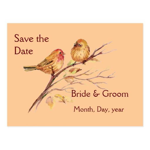 Two Little Bird Sparrows Peach Brown Rustic Nature Post Card