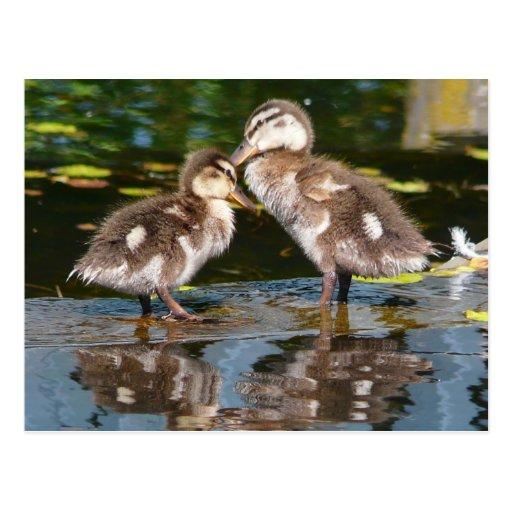 Two Little Duckies Postcard