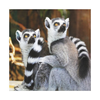 Two Little Lemurs Canvas Print