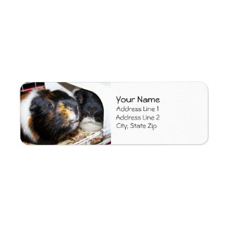 Two Little Piggies Address Labels