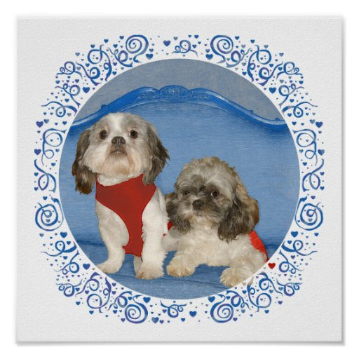 Two Little Shih Tzu Rescue Doggies Poster