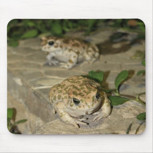 Two little toads - green frog print mousepad