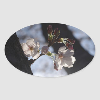 Two lonely cherry blossoms and sunlight oval sticker