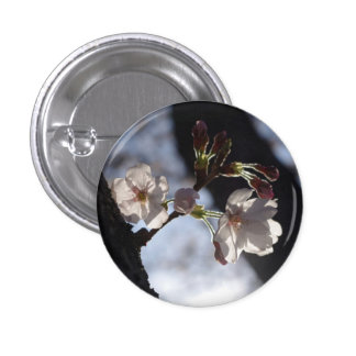 Two lonely cherry blossoms and sunlight pins