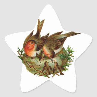 Two lovely adult Robins along with their Babies Star Sticker