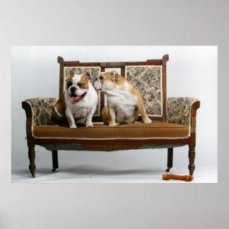 Two loving bulldogs poster
